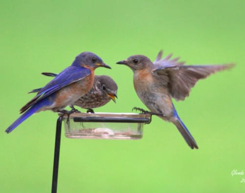 Fall Statewide Bluebird Blitz