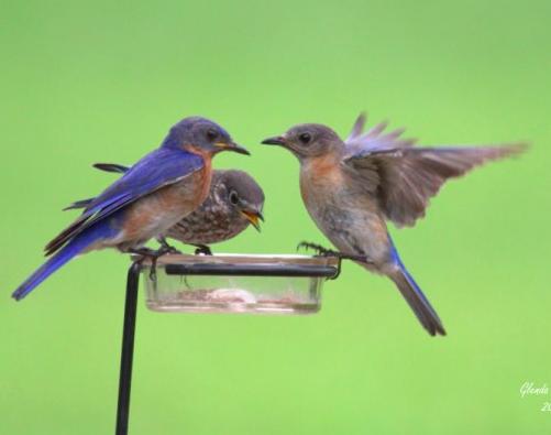 Fall Bluebird Blitz Results