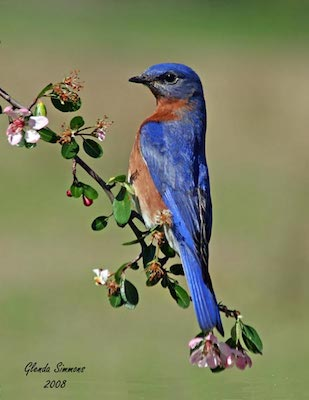 """All About Bluebirds""          Meeting – Penney Farms"
