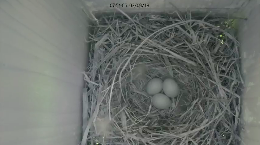 Follow Nest Box Activity on our Live Stream
